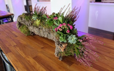 Bespoke bark planter display for All Blacks hospitality area, Rugby World Cup 2015
